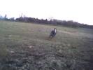 Farmrunninghorse-2